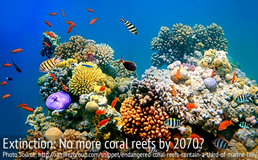 2-Coral_Reef_Dying