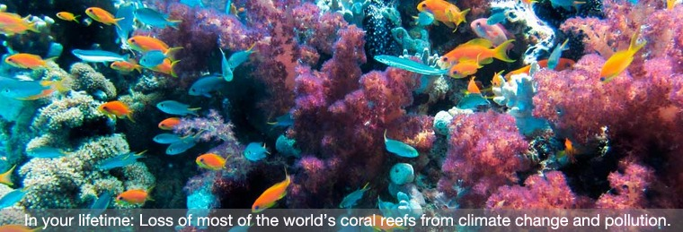 Extinction of Corals
