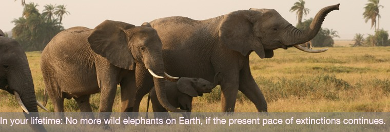Extinction of Elephants